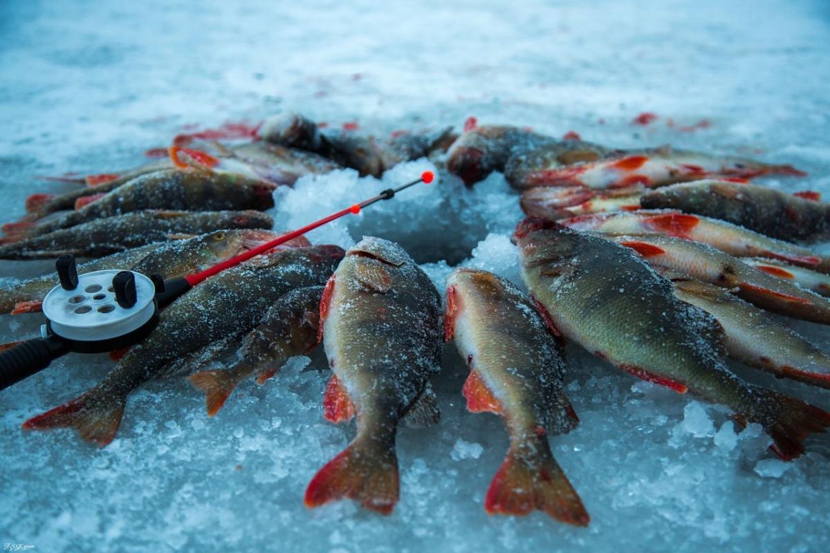 Картинки из рыбы на льду